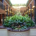 superplants atrium feature