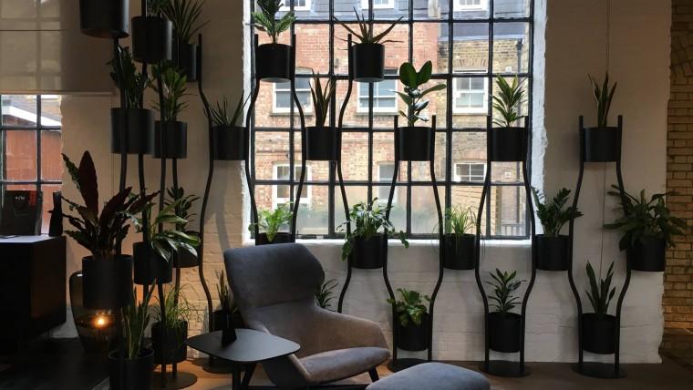 Super Office Plants