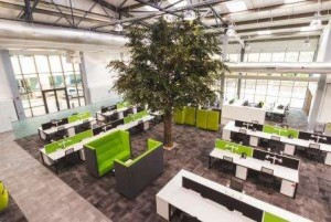 Bespoke Trees by Superplants