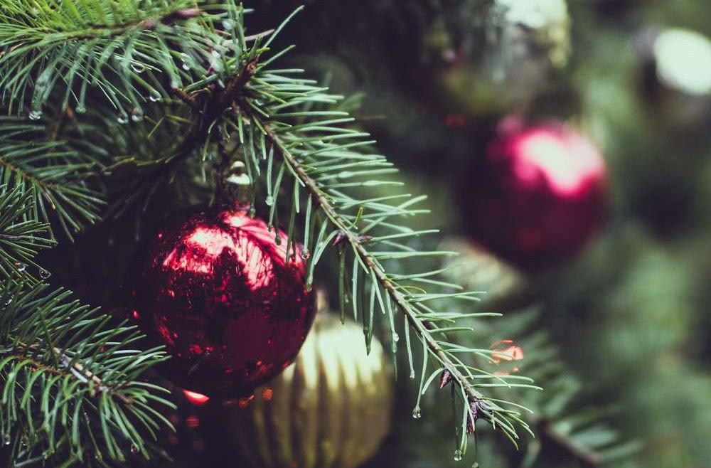 Christmas Tree Rental by Superplants