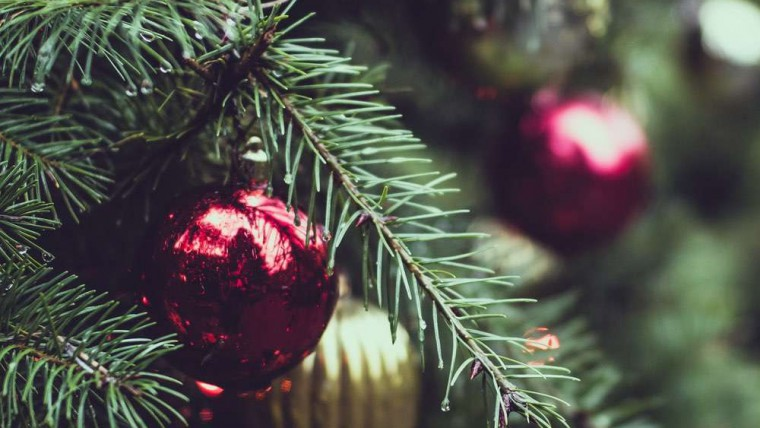Christmas Tree Rental by Superplants