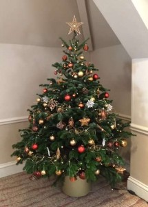 christmas interior live trees 0004