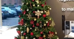 Commercial Christmas Tree Hire