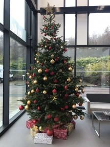 christmas interior live trees 0008