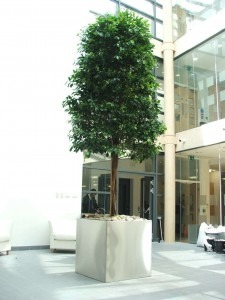 Bespoke Large Trees by Superplants