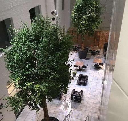 Bespoke Large Trees