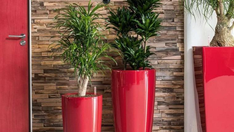 Hire Stylish Office Plants