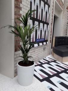 Office Plants Superplants