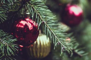Christmas Trees Hire Superplants