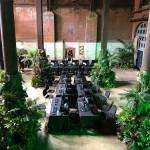 Superplants Interior Planting