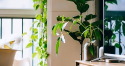 Office Plants & Wellness