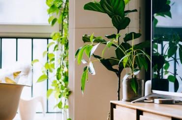 Office Plants & Wellness