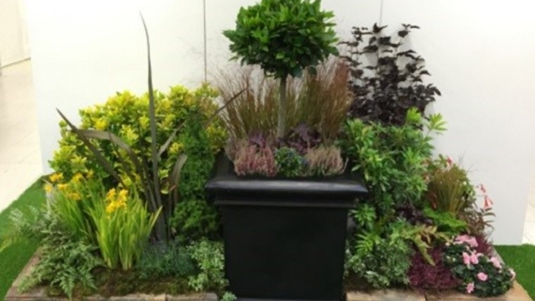 Plants for Events & Exhibitions