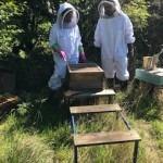 Superplants Nursery Bee Hives