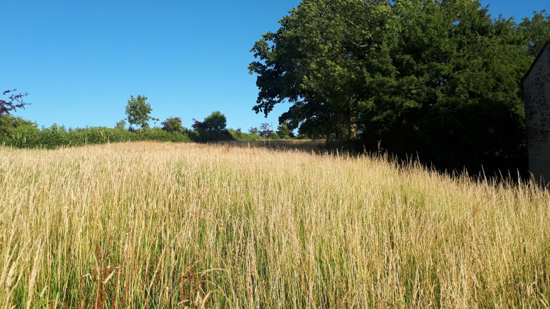 Environmental Sustainability at Superplants