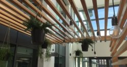 Corporate Artificial Planting with Superplants