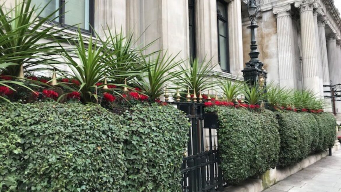 Exterior Planting with Superplants