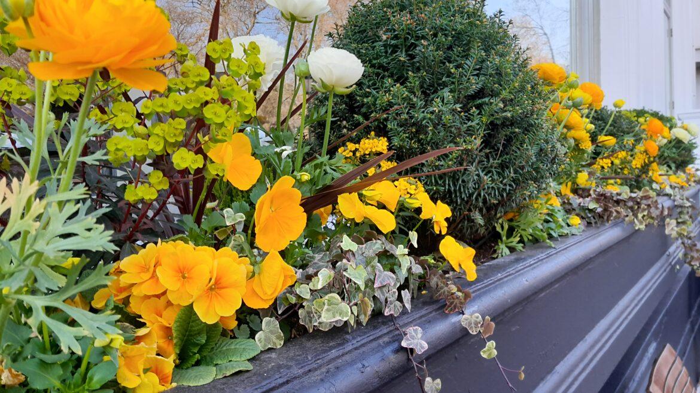 Live Seasonal Planting