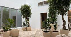 Atrium Planting